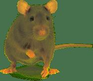 nashville pest control company
